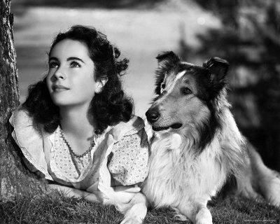 "Liz Taylor in ""Torna a casa Lassie!"""